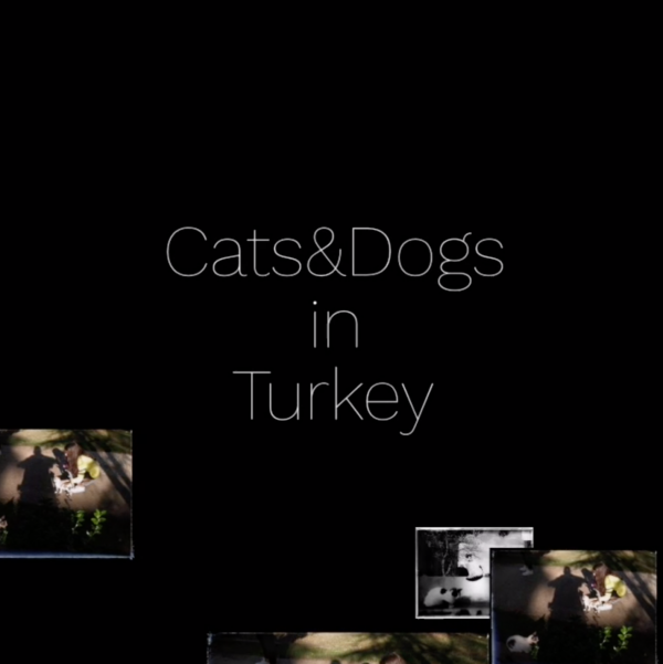Cats And Dogs in Turkey
